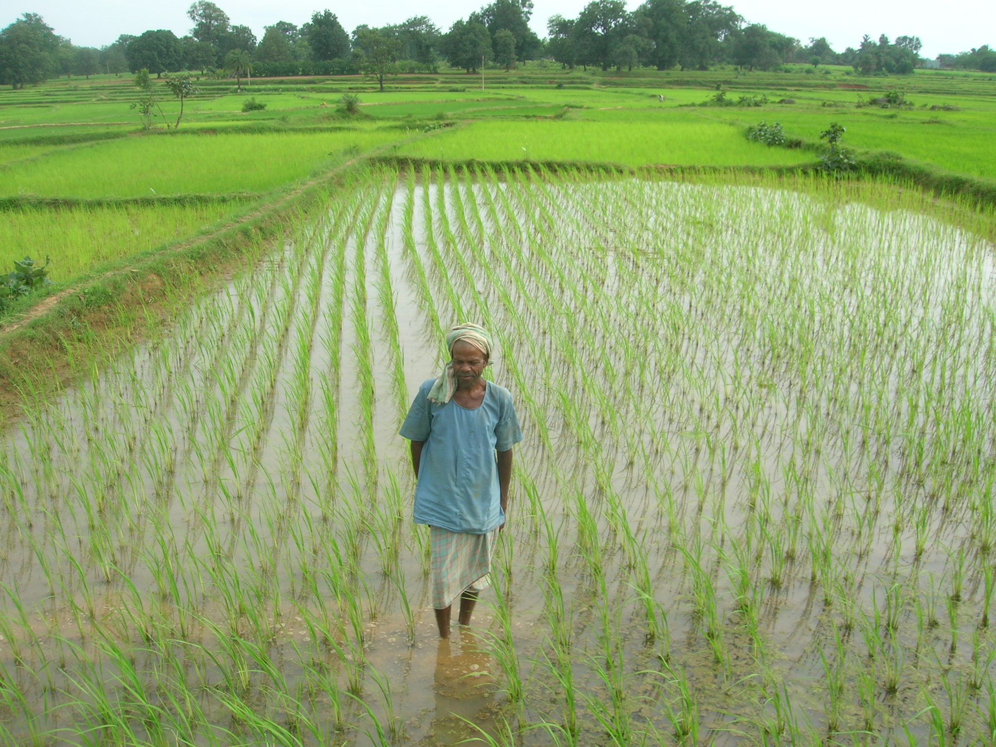 farming systems in india In this farming system, you can expect a very low yield per acre this kind of practice is called by different names in different states in india.
