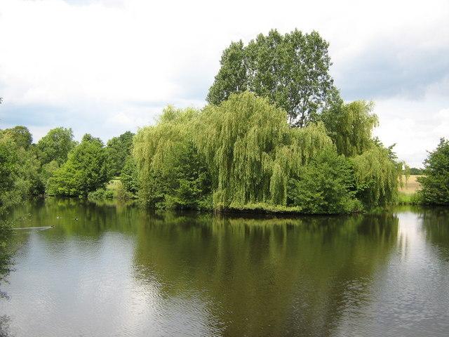 Shop Pond, Windsor Great Park - geograph.org.uk - 847369