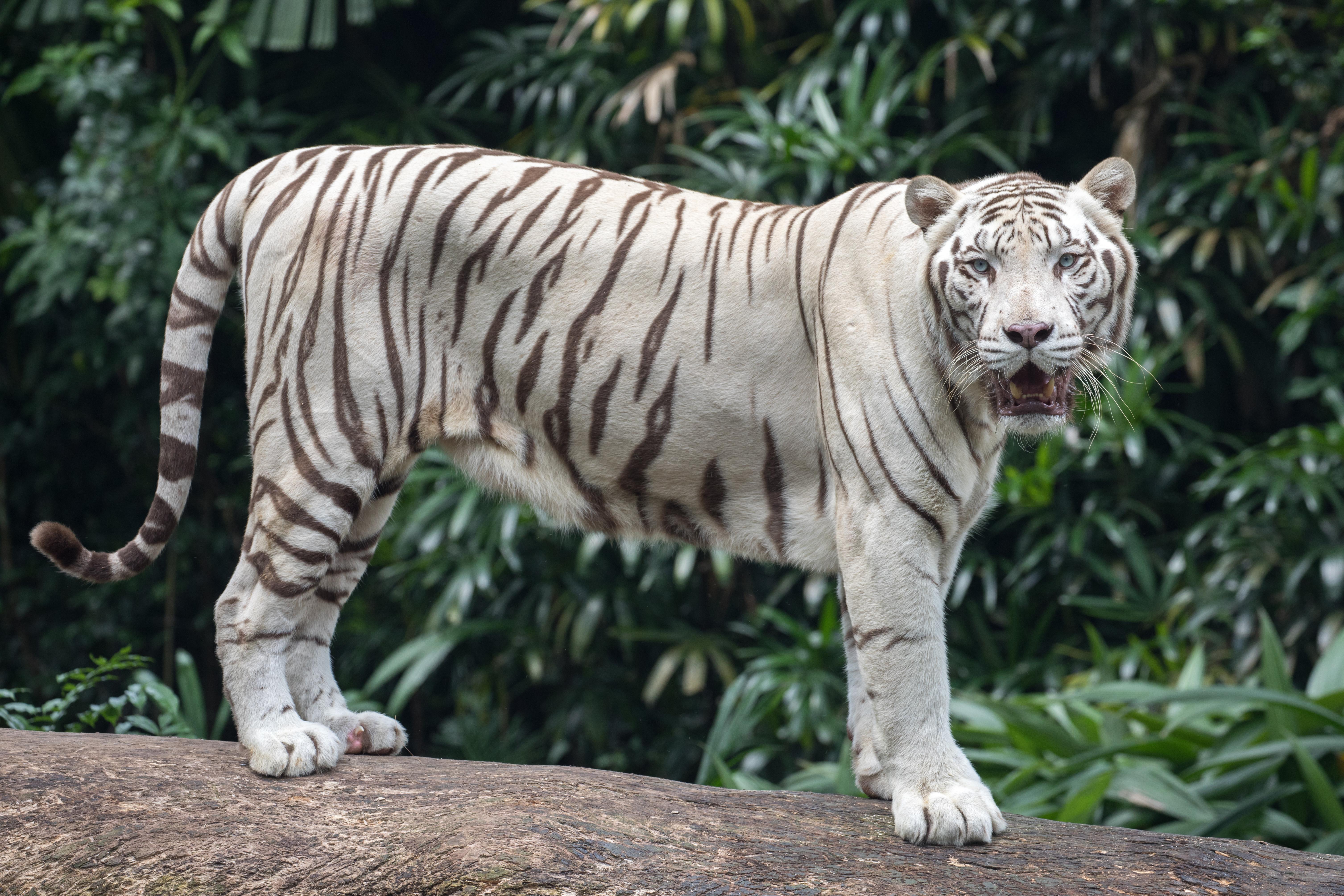 Daniel Tiger Family Coloring Pages | Daniel tiger, Tiger birthday ... | 4017x6026