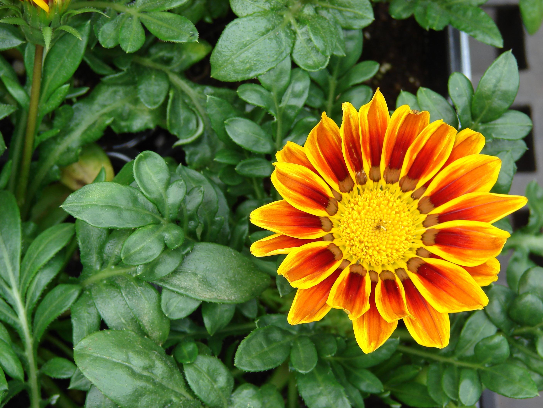 Цветы однолетки неприхотливые фото