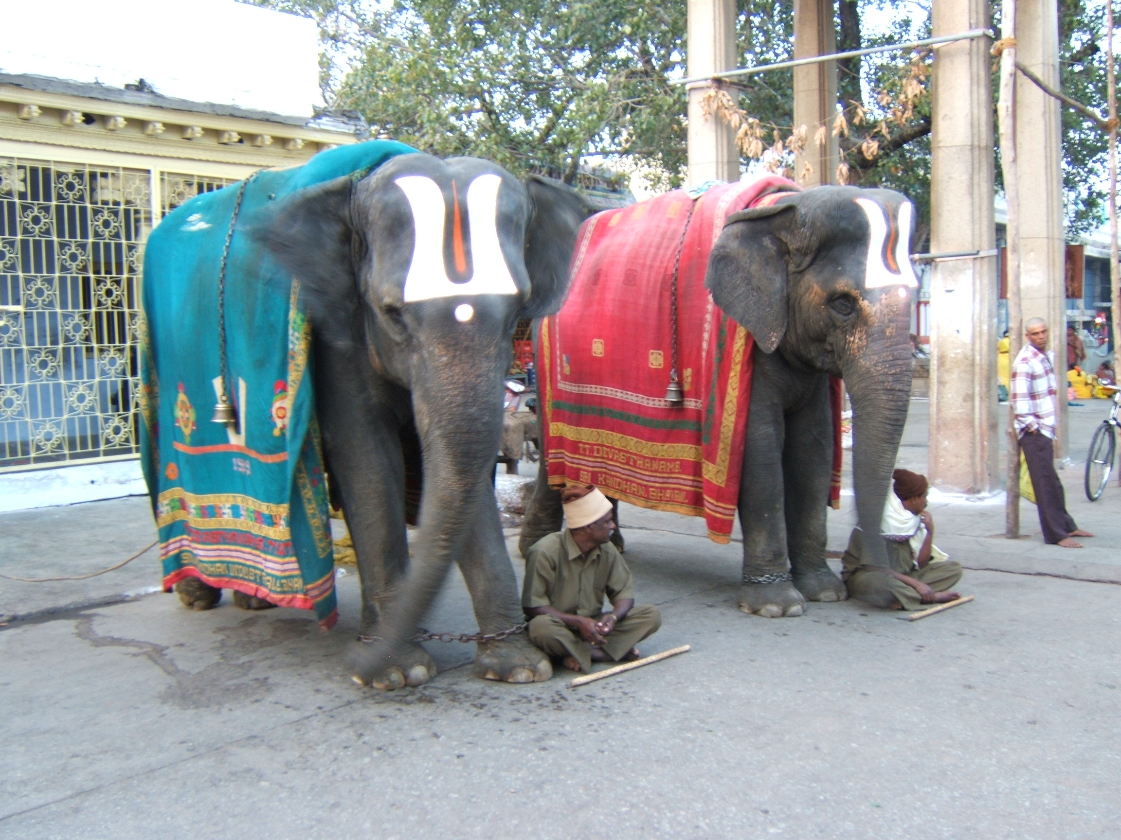 Tirupati India  city pictures gallery : Файл:Temple elephants Tirupati India — Википедия