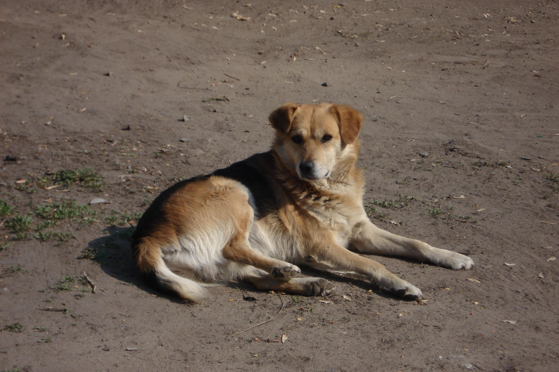 Беспородная собака — Википедия