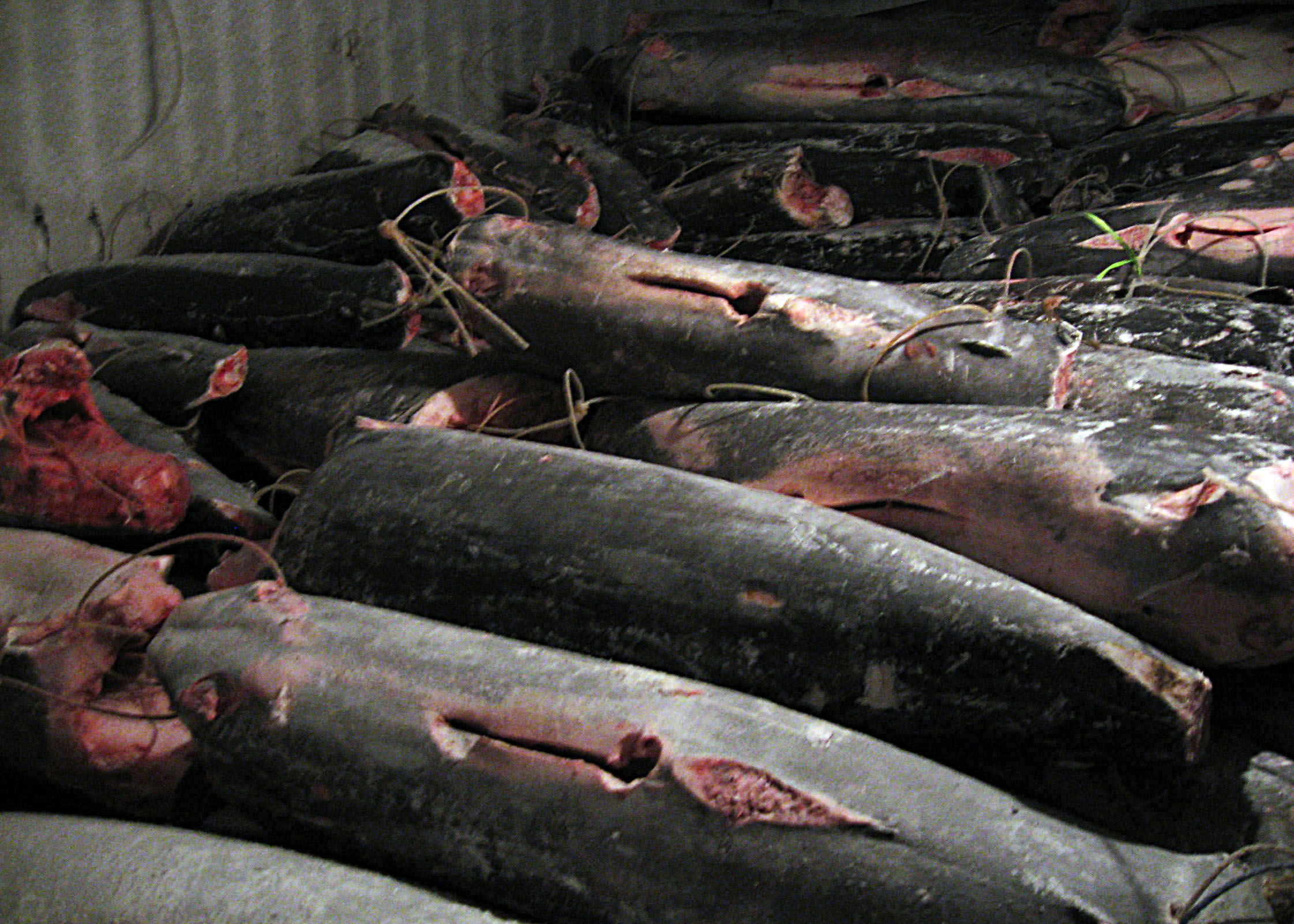 File us navy 090817 g 0000x 002 stacks of fish lay in the for Sierra fish in english