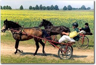 Roadster (horse)