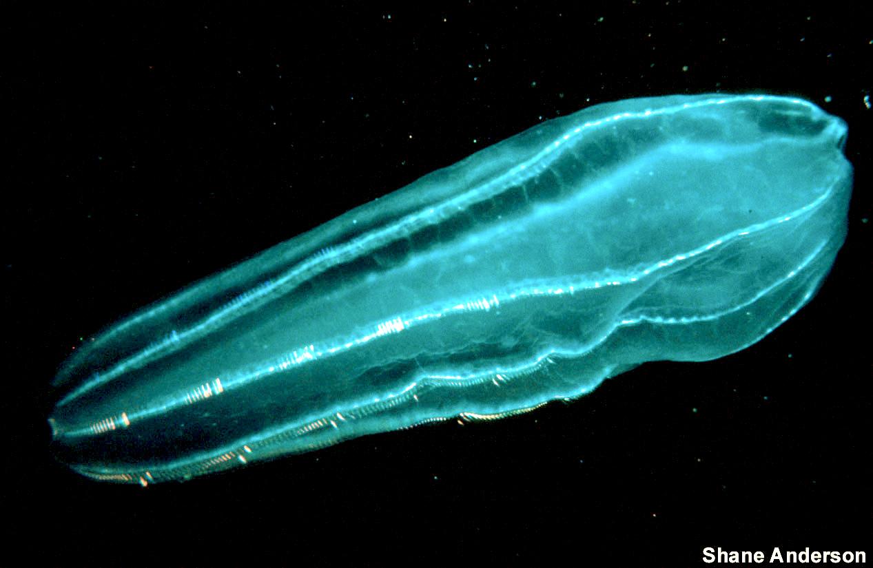 Zooplankton2 300.jpg