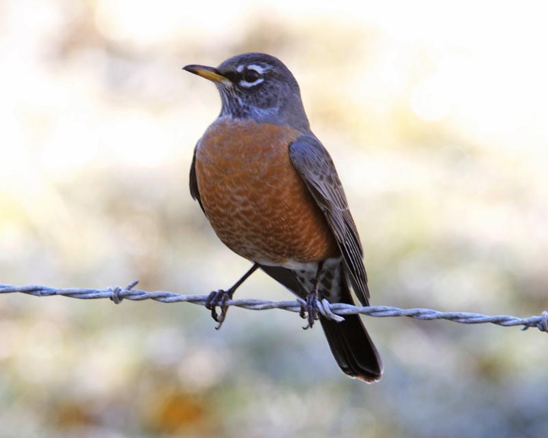 Backyard birds - grow a garden, feed the birds, learn ...
