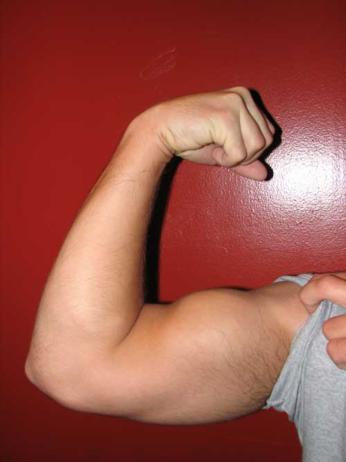 biceps arm flex supinate wiktionary