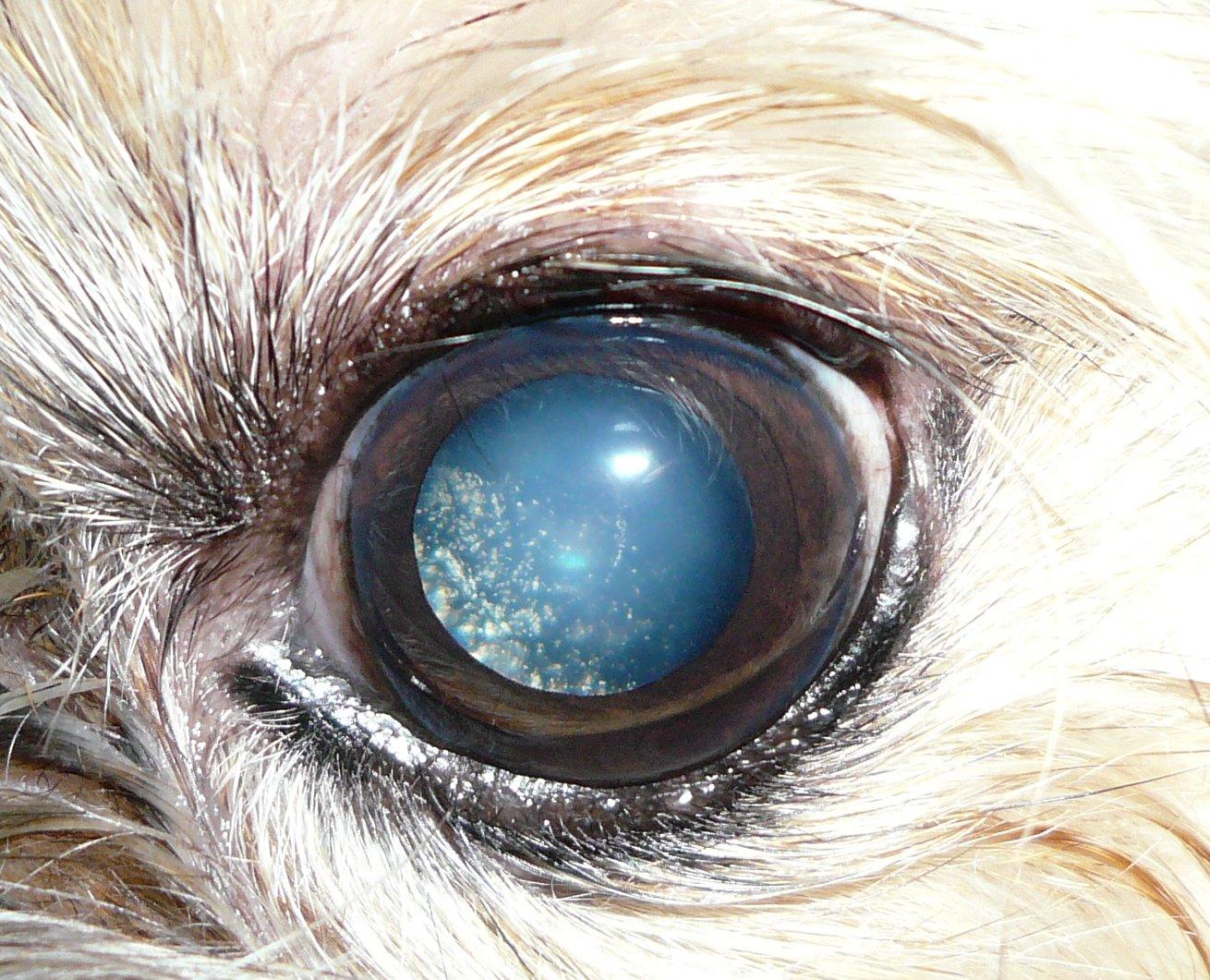 Dogs Eye Is Swollen Tree Bark Texture Red