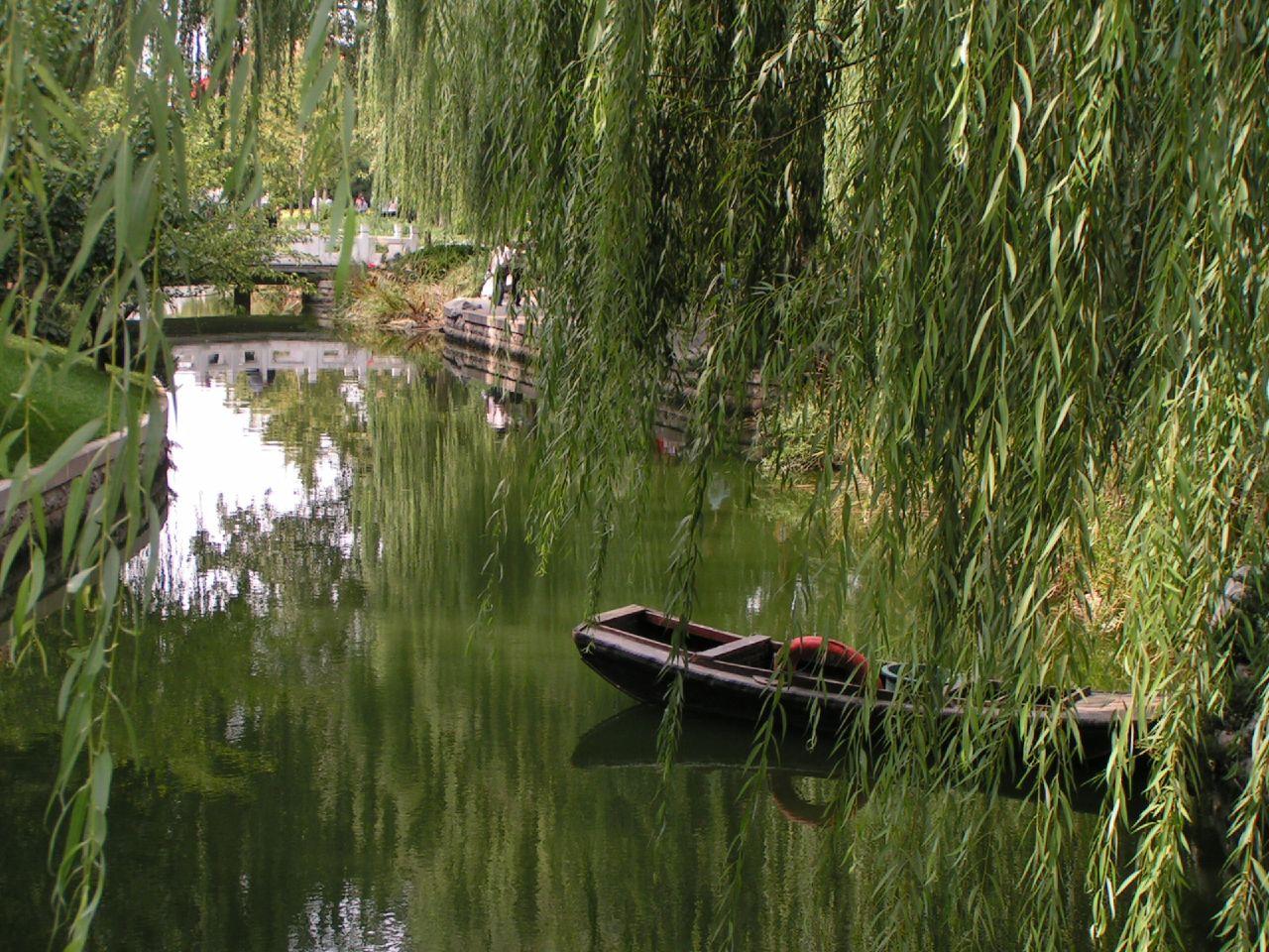 Lago de Beijing (Pekín). El árbol que se ve en primer plano es un sauce llorón (Salix babylonica).