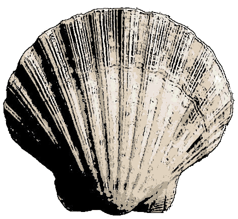 File:Bivalve Sea Shell.png