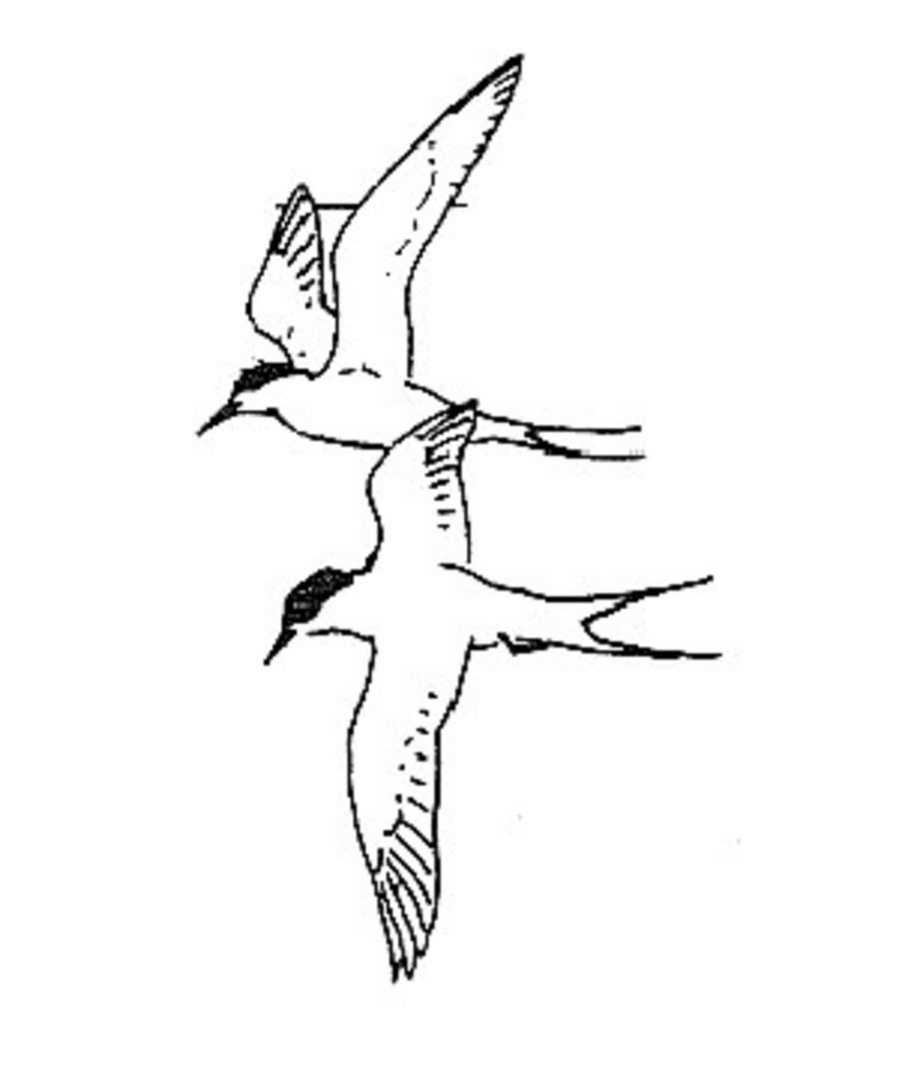 Black and white flying bird clip art
