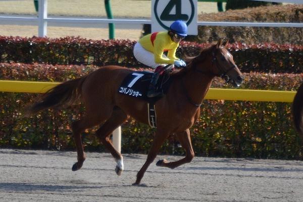 Copano-Rickey Hyacinth-Stakes 2014