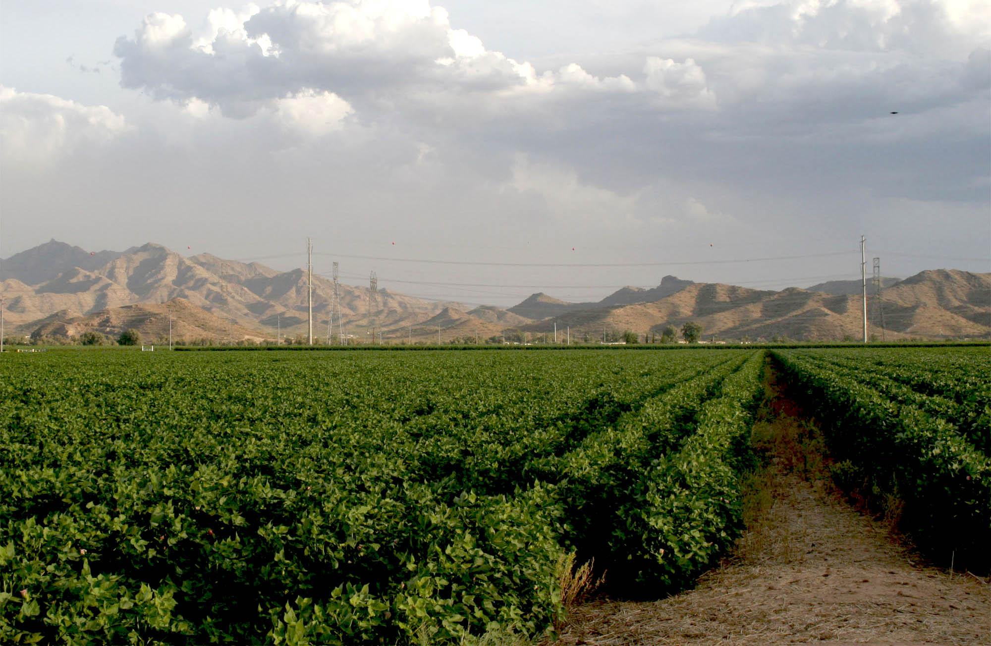 bureau of agriculture