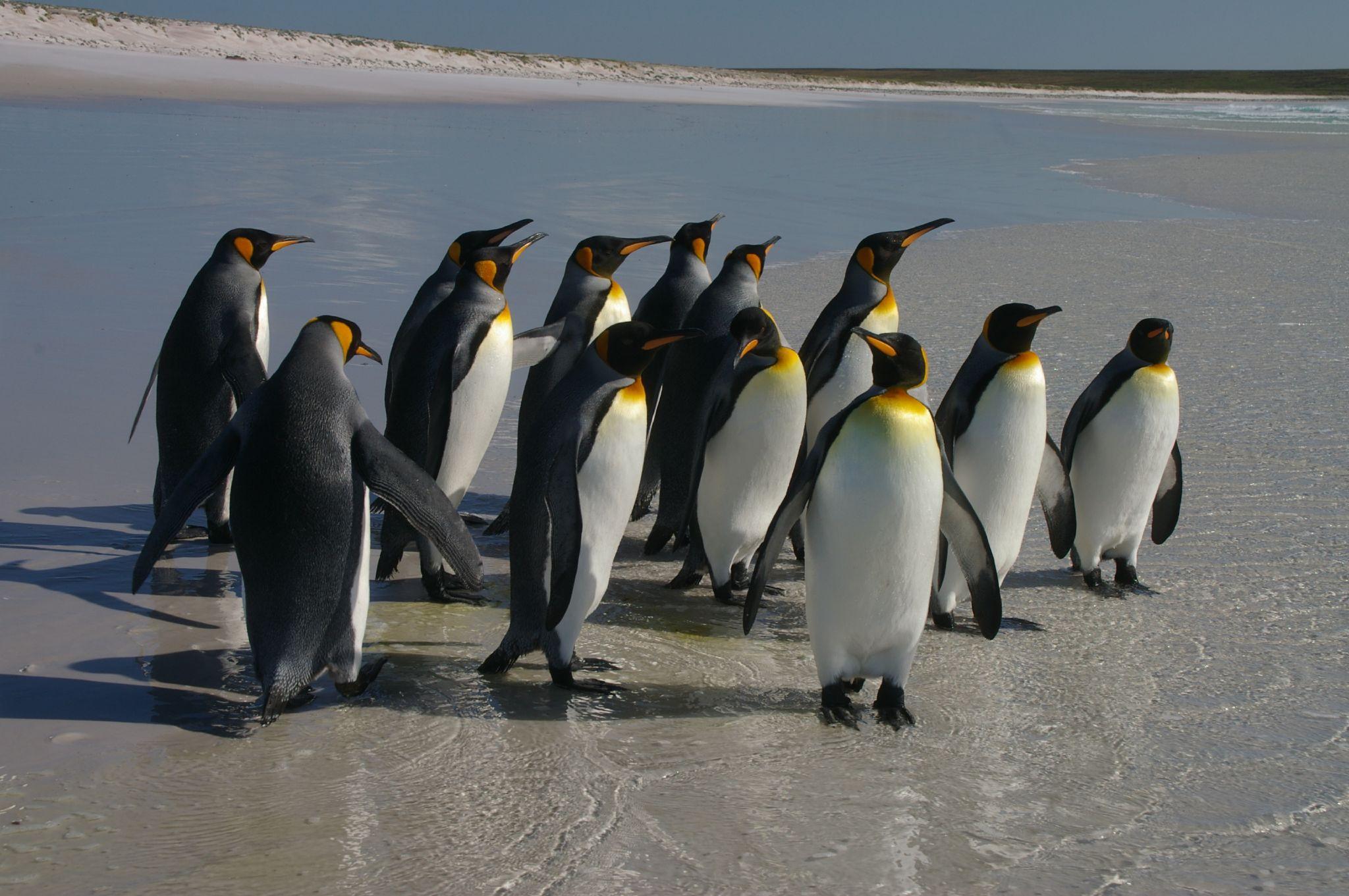 """南极15万企鹅未必已死 或已""""迁徙"""" - 纽约文摘 - 纽约文摘"""
