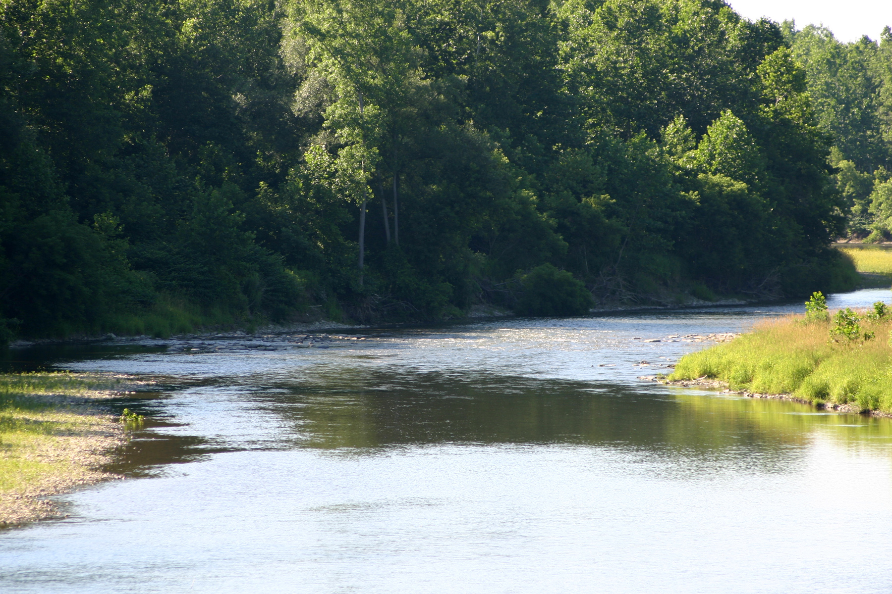 view of a western New York state river, typical of where Hellbender salamanders might be found