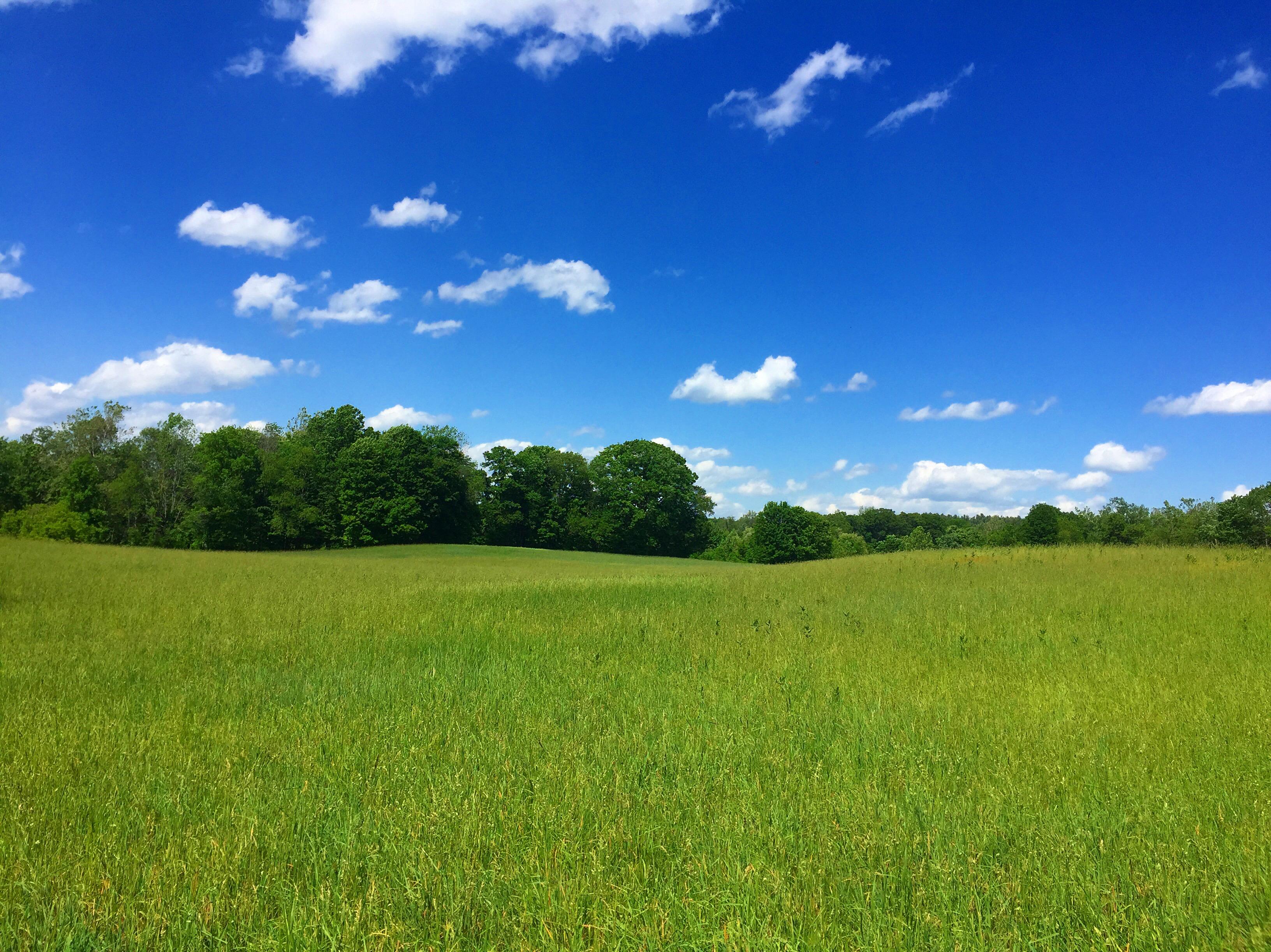 file:green field blue sky clouds - wikimedia commons