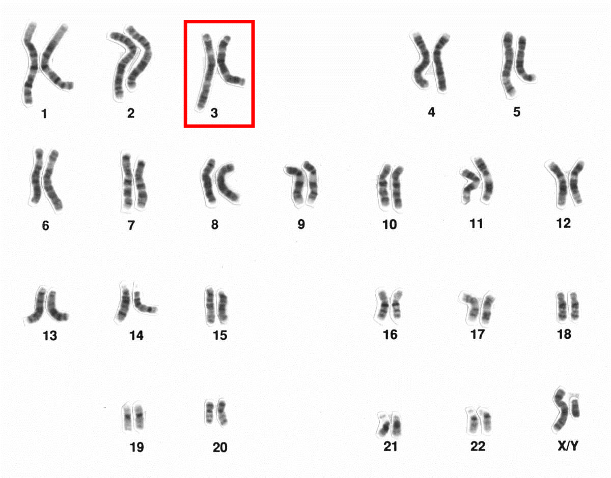 karyotype analysis and species identification Karyotype analysis on 11 species 603 123 species with symmetrical karyotype correspond to the basal trait, while species with asymmetrical karyotype.