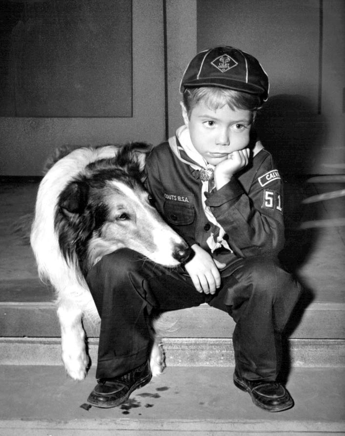Robert Milner Dog Training Videos