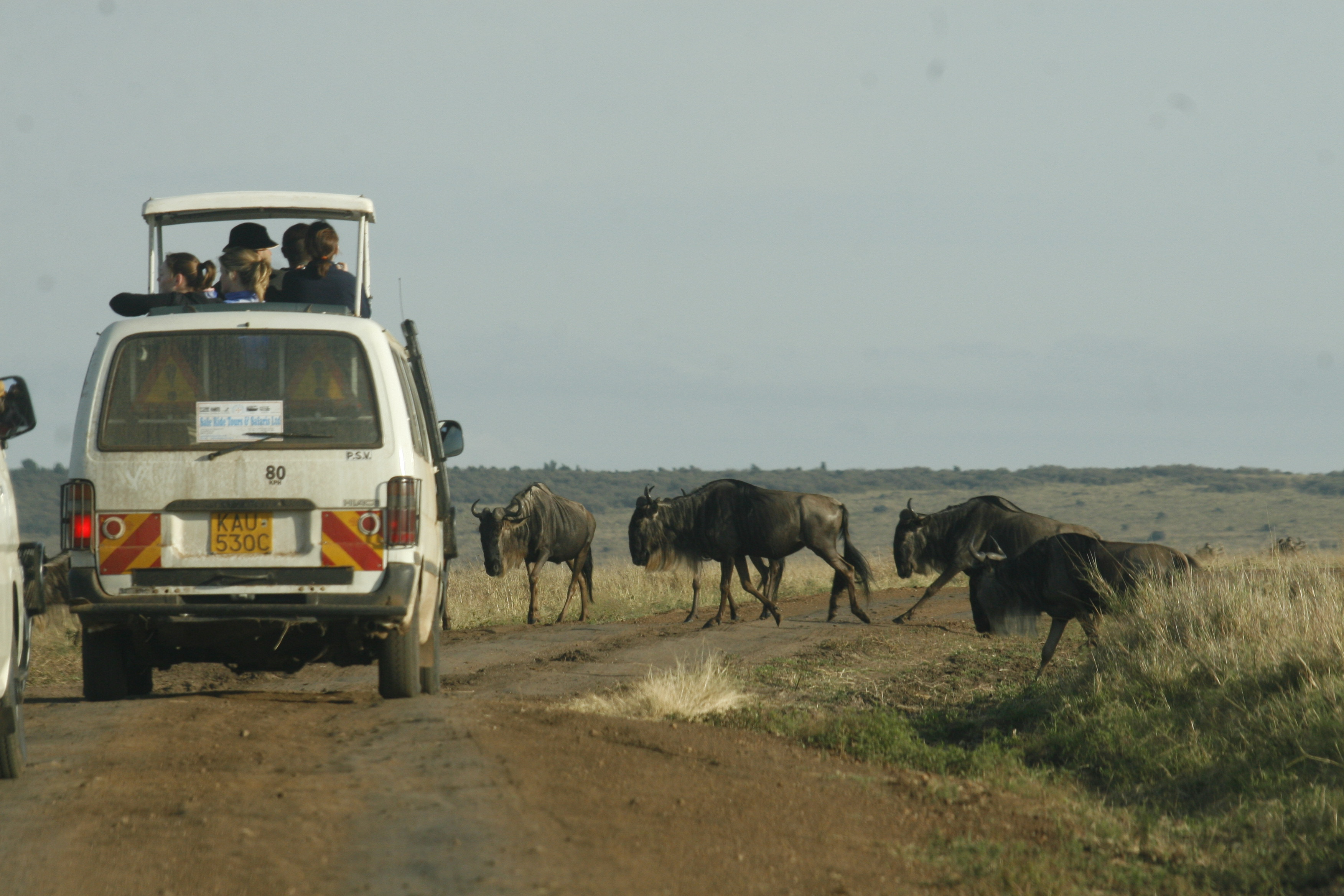 Safari in kenya, safari in africa, african safari