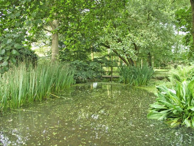 Lake in Japanese Garden, Trent Park, N14 - geograph.org.uk - 316817
