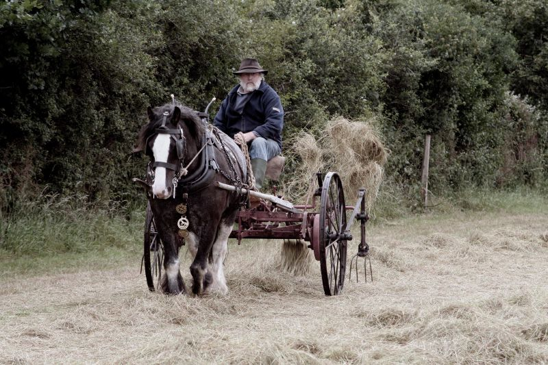 Making Hay the Old-fashioned way