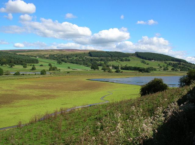 Marshland at Gouthwaite - geograph.org.uk - 225571