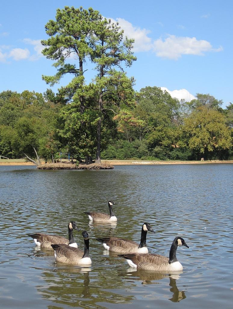 Olive Branch City Park Olive Branch Ms