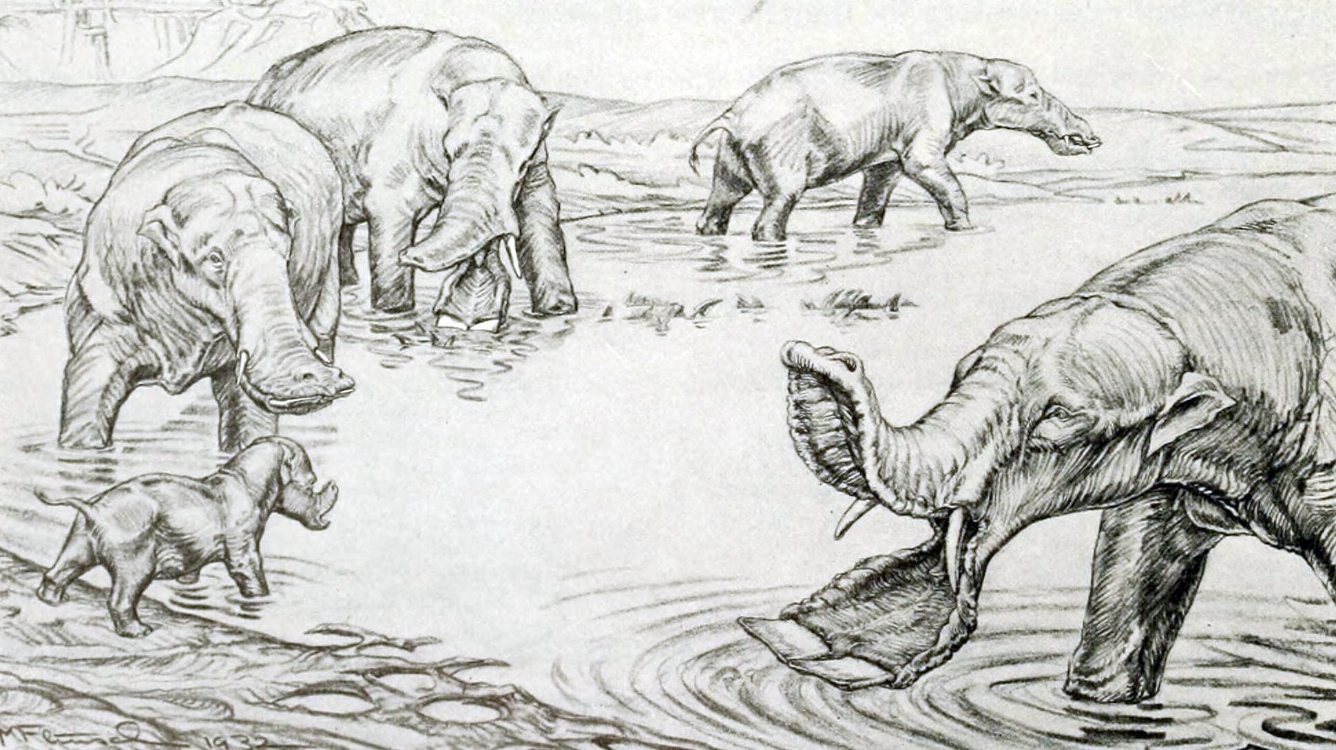 Serbelodon