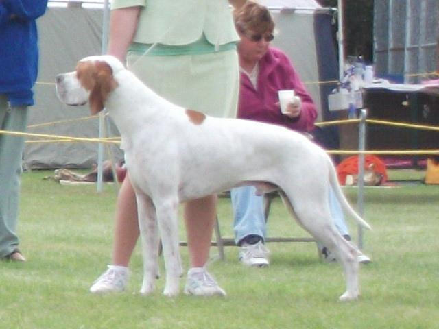 Kennel Club Pointer Dog Judges S