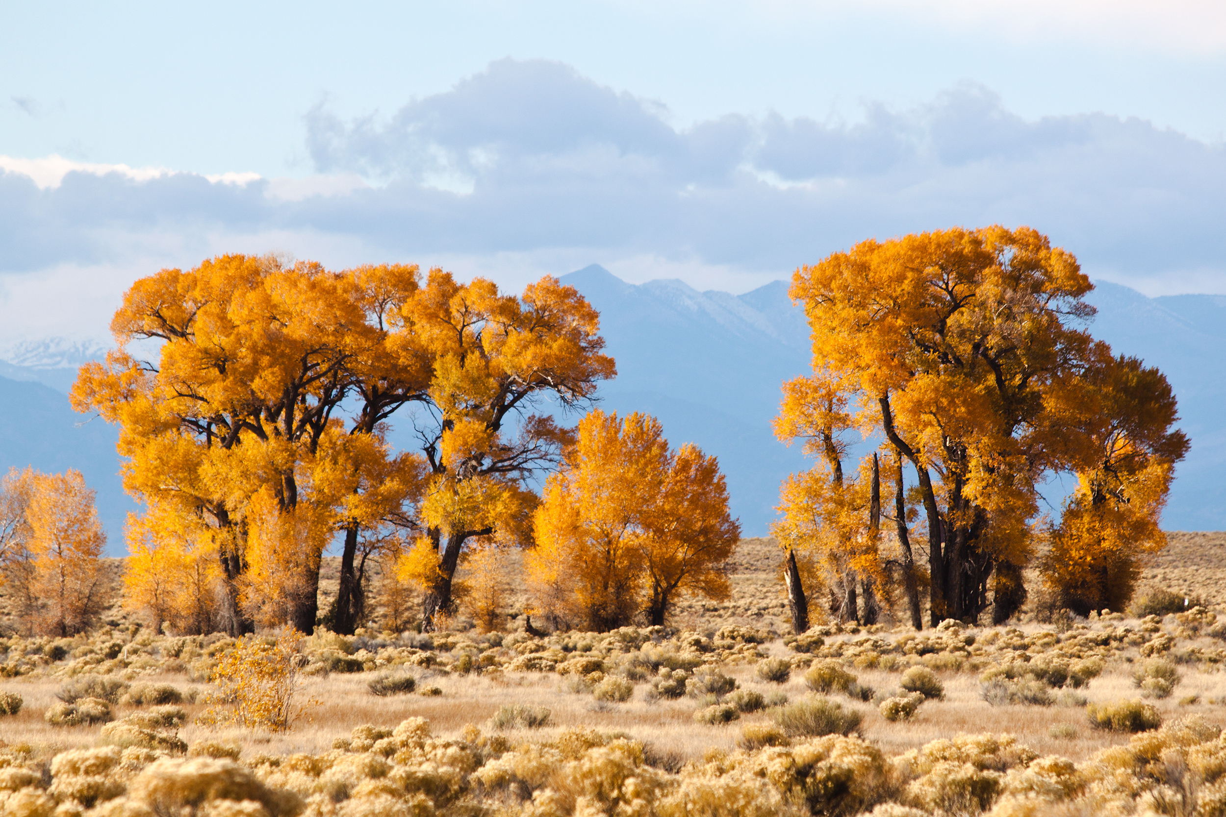 Stand tall like a grove of strong desert trees by adding strength training exercise to your lifestyle