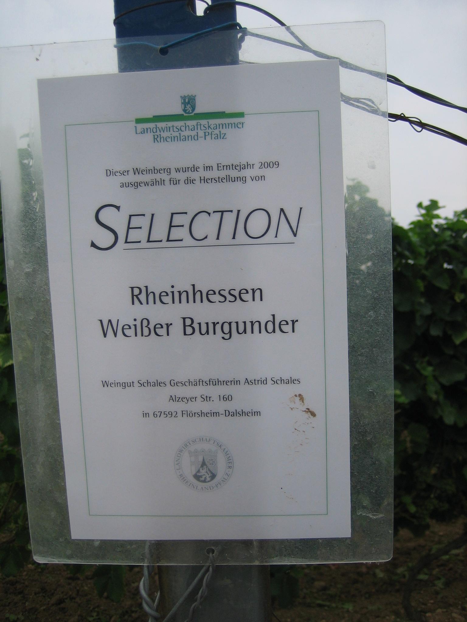selection-rheinhessen.jpg
