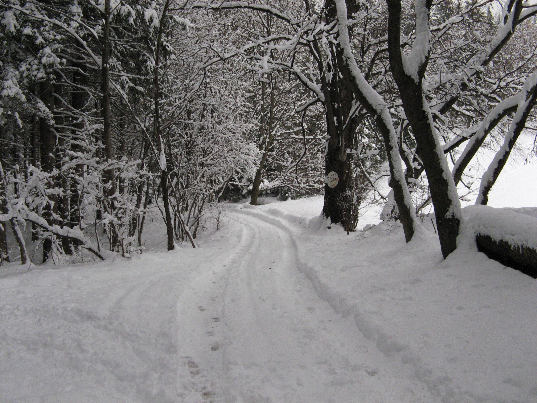 File:Sentiero Alpe Vicerè-inverno.JPG - Wikimedia Commons