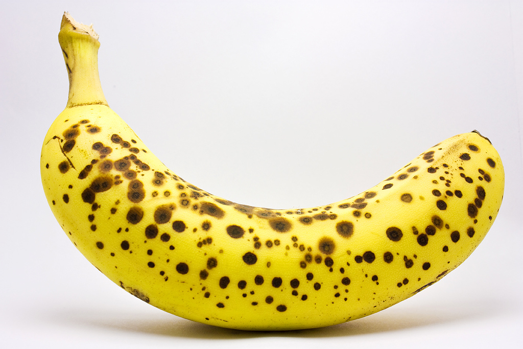 file spotted banana in a lightbox jpg wikimedia commons