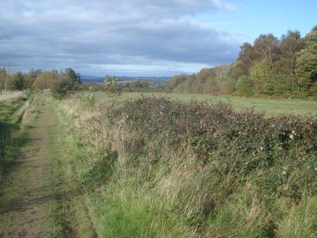 Track across Bromyard Downs - geograph.org.uk - 1132564