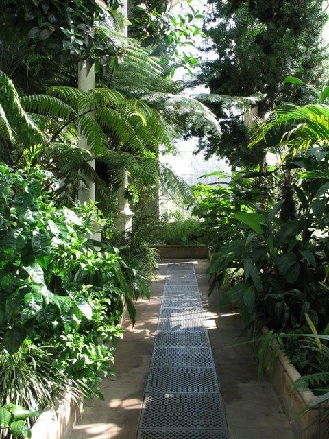 FileTropical Palm House Royal Botanic Garden Edinburgh