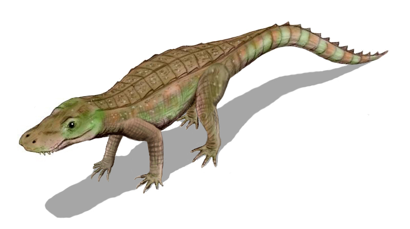 'DuckCroc' - Anatosuchus minor