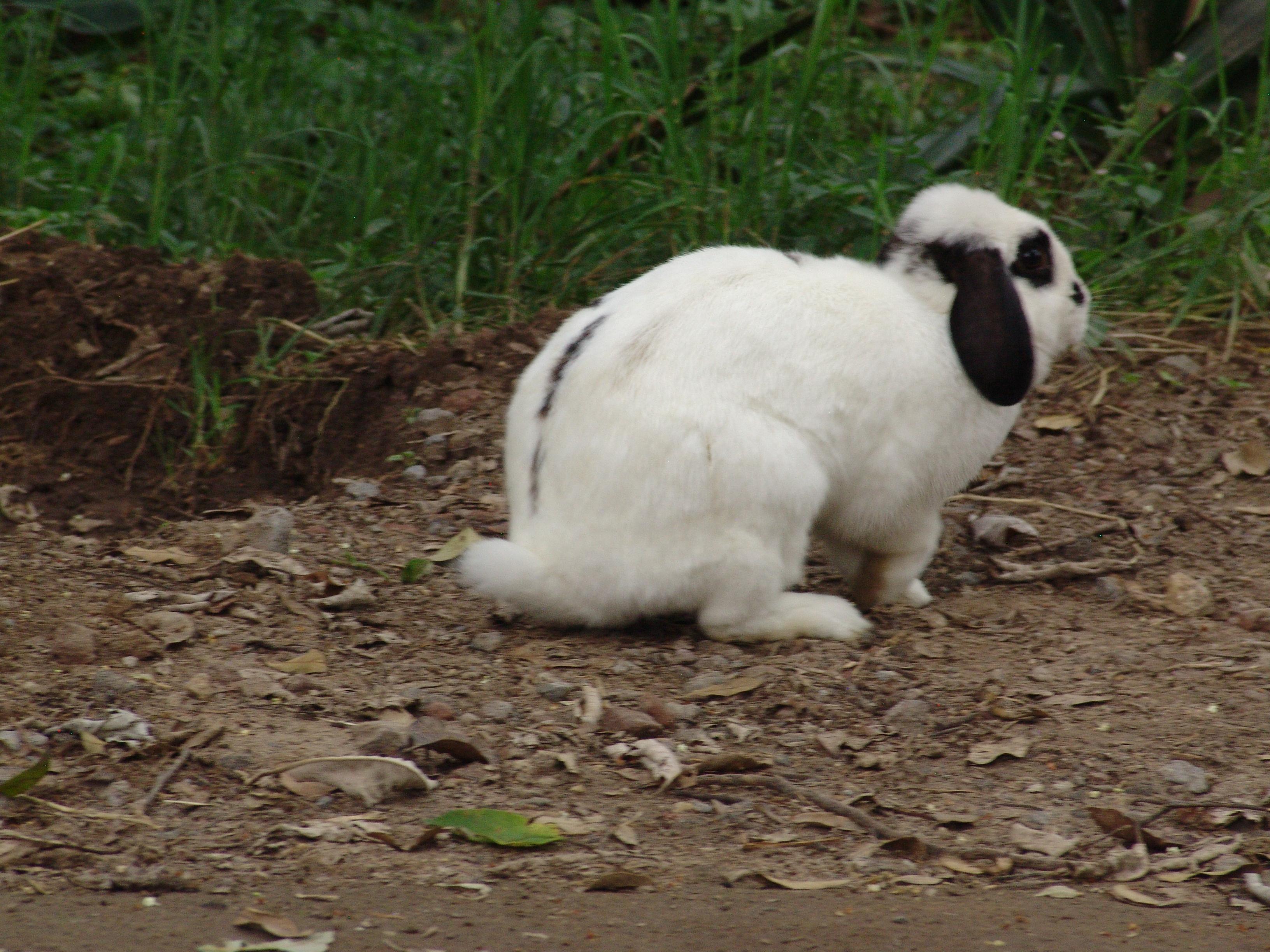 El Conejo De Alicia Scape Room