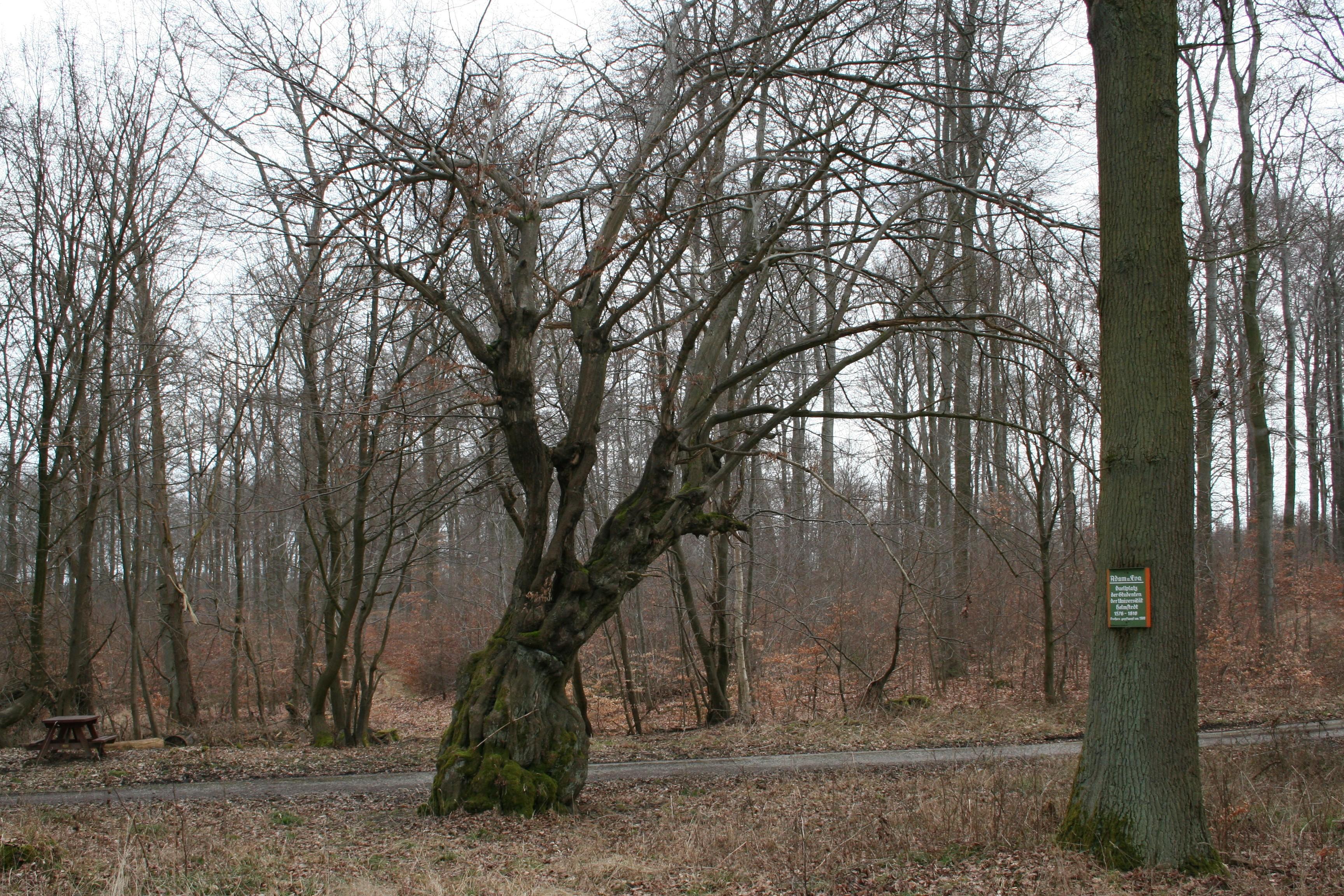 Bäume - Baumlexikon mit Baumarten