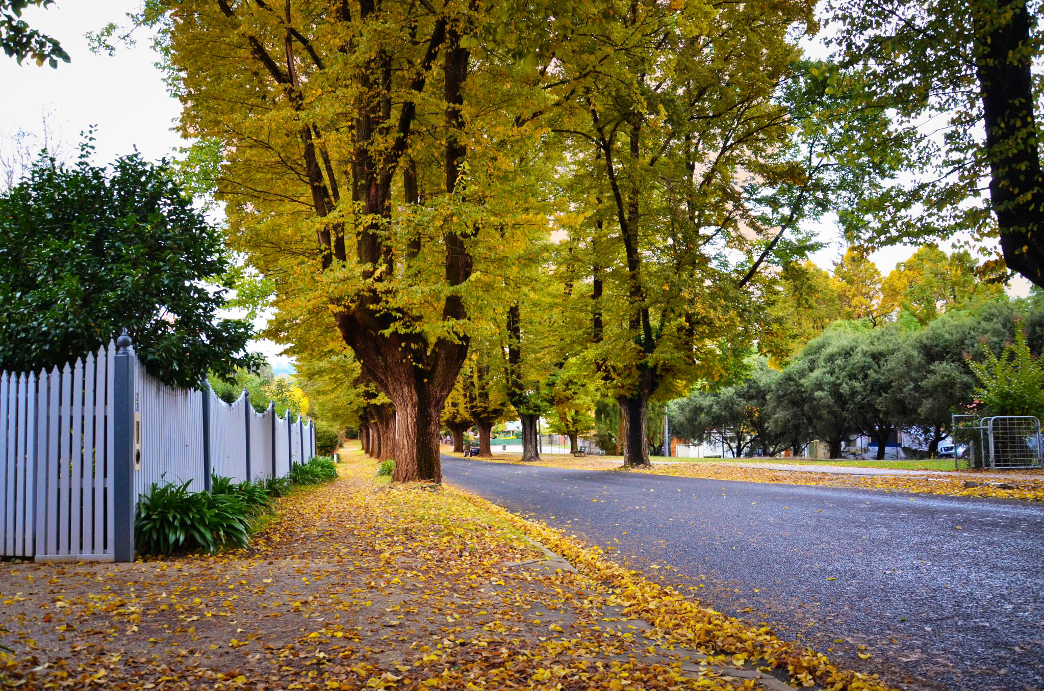 File Bright Vic Autumn Jpg Wikimedia Commons