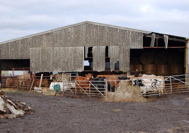 Cow House Design