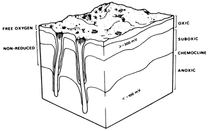 The redox potential discontinuity (RPD). Figure taken from Graf (1992).