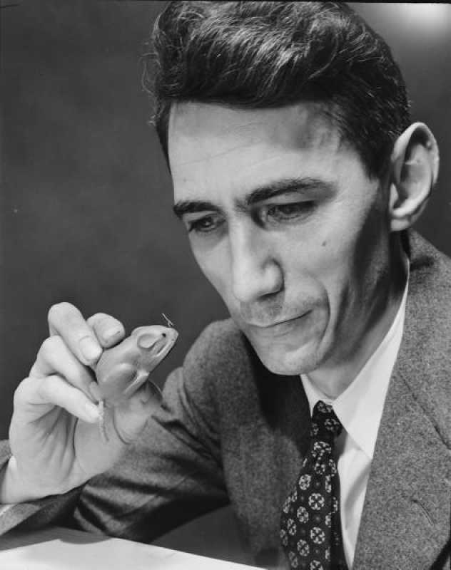 Image result for claude shannon