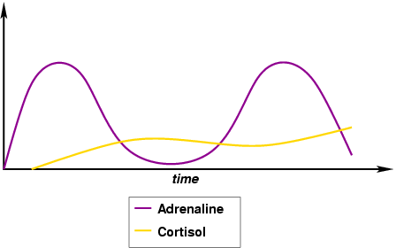 relationship between epinephrine and adrenaline