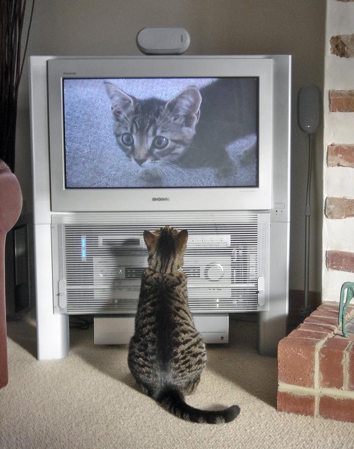 Интернет vs. ТВ