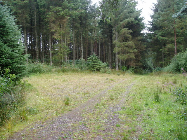 Forestry clearing - geograph.org.uk - 218880