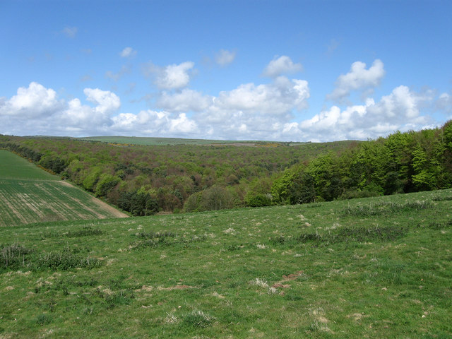 Friston Forest - geograph.org.uk - 1272307