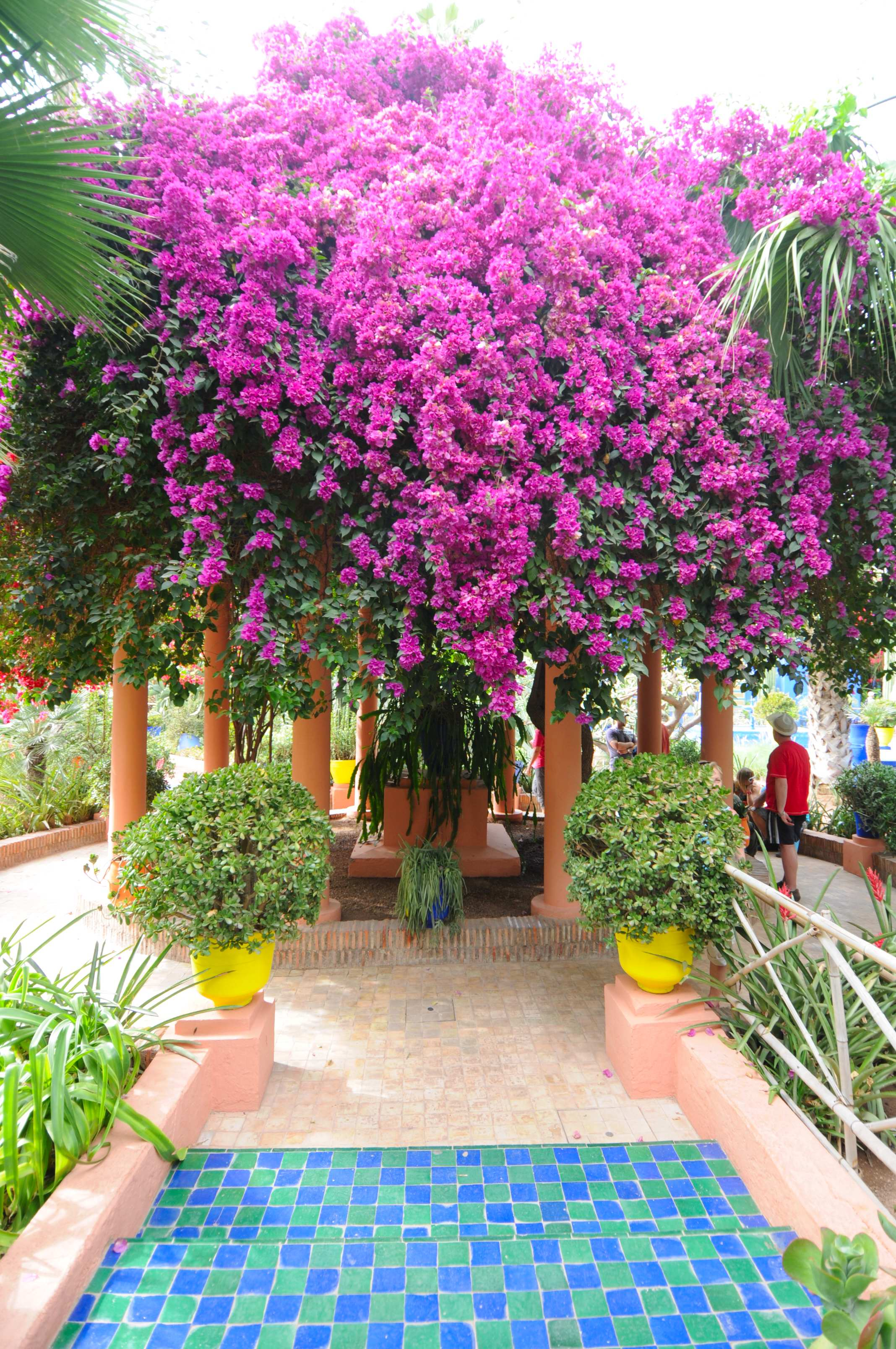 File le jardin des majorelle 7538 jpg wikimedia commons for Les jardins de lee