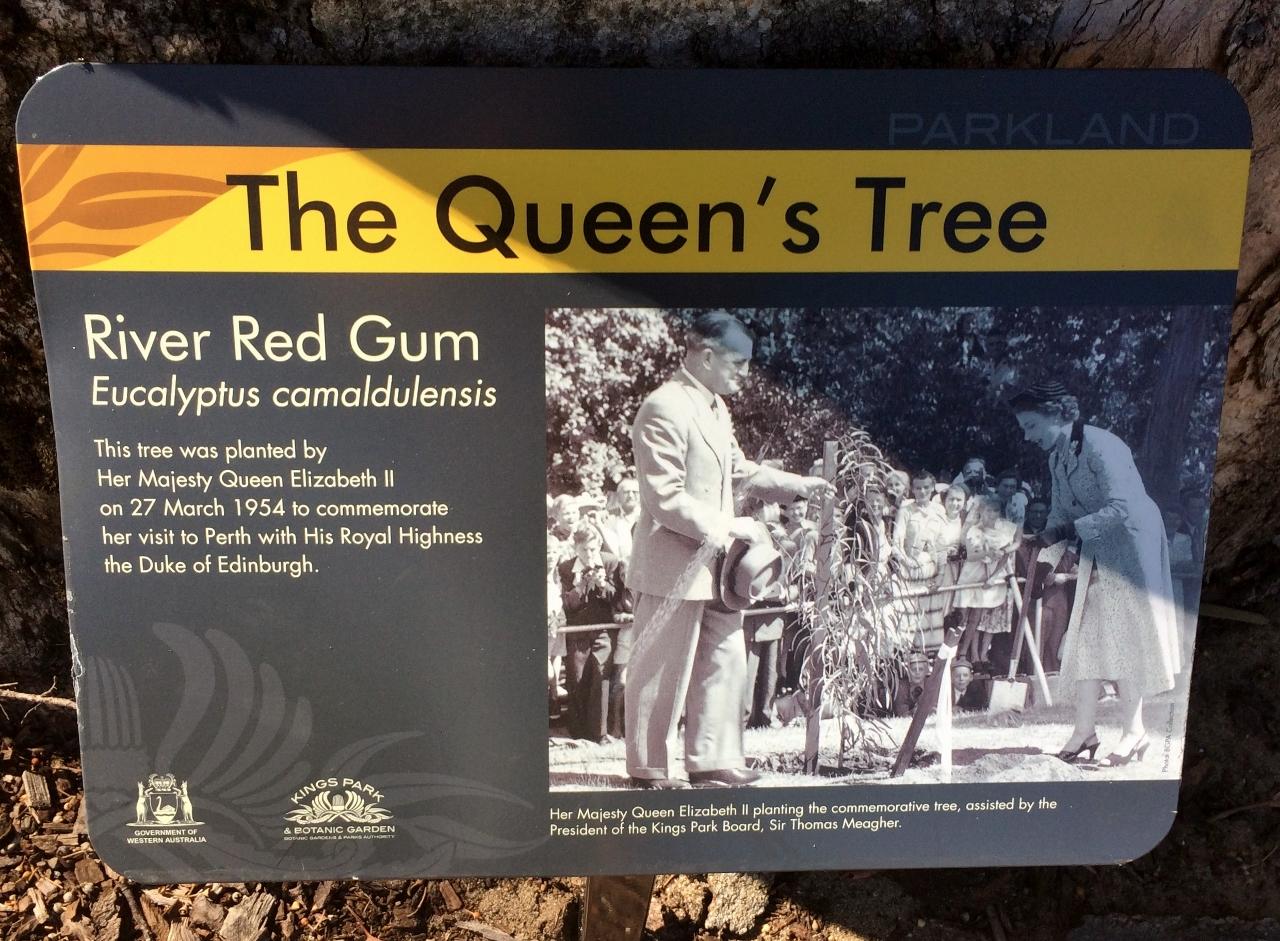 File:Placard - Queens Tree - Kings Park WA jpg - Wikimedia