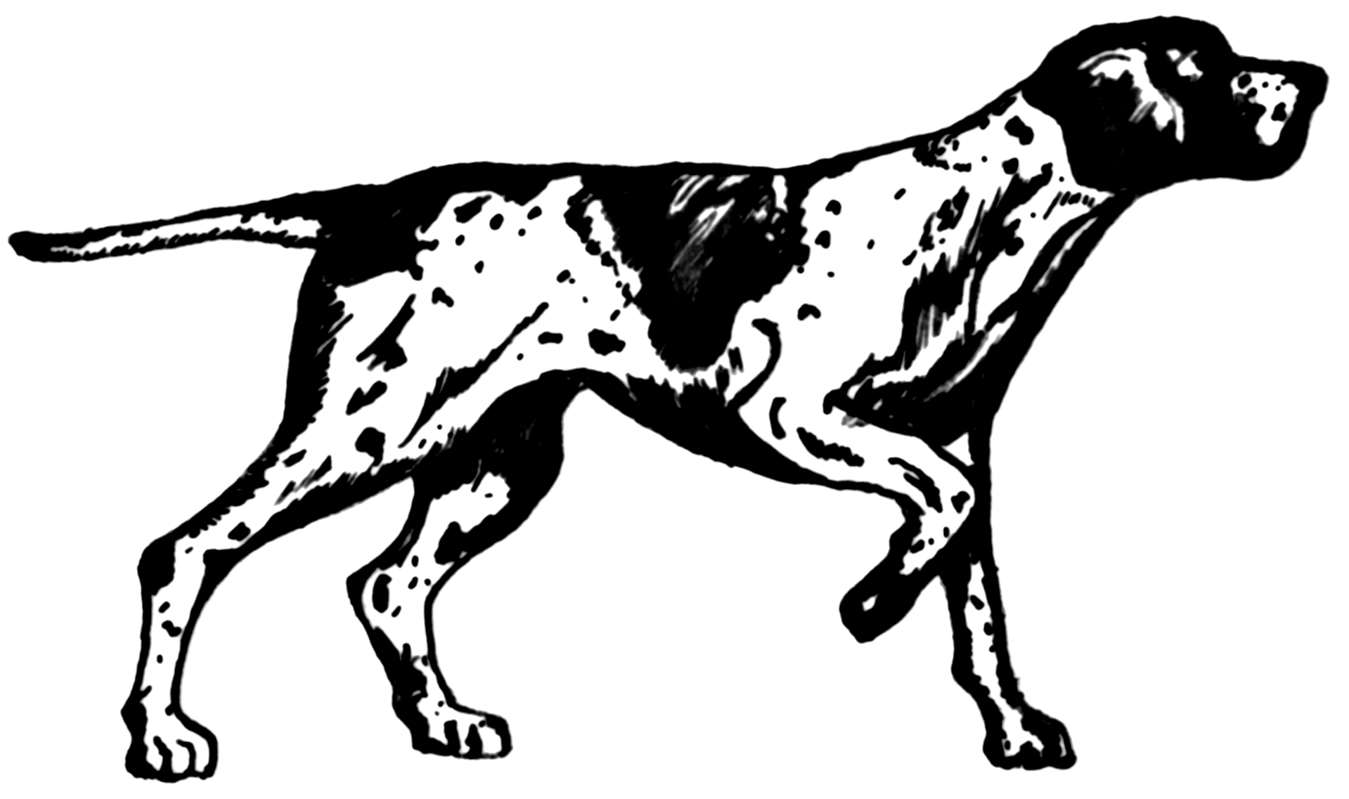 how to draw a hunting dog