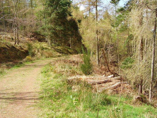 Pressmennan Wood - geograph.org.uk - 173220